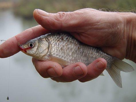 рыбалка на пруду игумнова