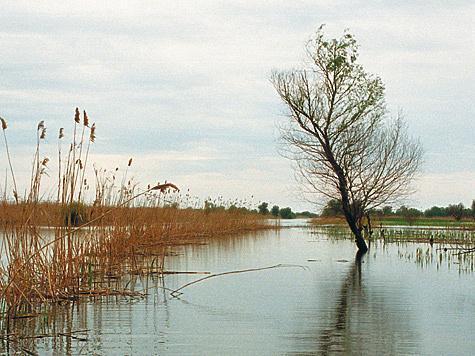Фото: Владимир Сагадиев.
