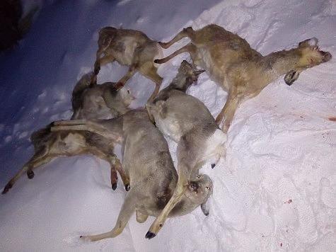Фотографии охотинспекции Курганской области