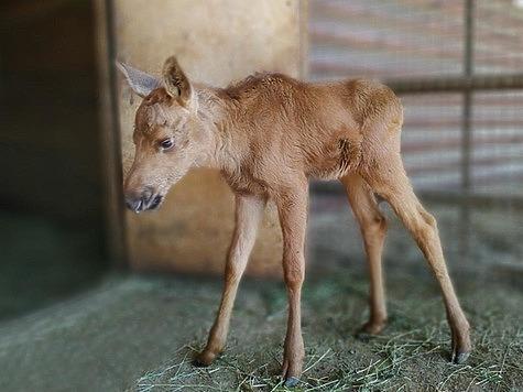 фото: Самарский зоопарк