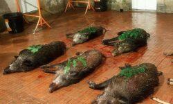 В Хакасии добросовестные охотники гарантированно получат лицензии