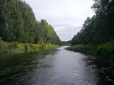 Река Волюга. Фото: fotki29.ru.
